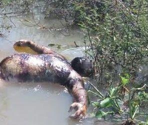 Encuentran cuerpos de personas flotando en el río Lerma
