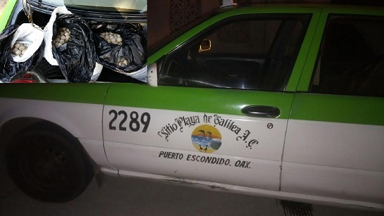 Taxista de Puerto Escondido detenido con huevos de tortuga