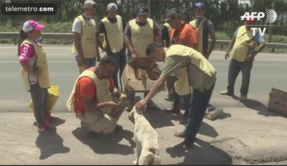 Guatemala: rescatan perros abandonados tras erupción