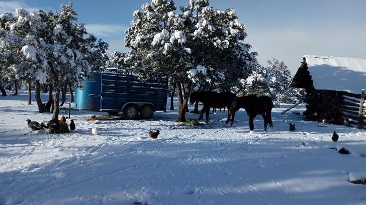 Reportan nieve en seis municipios; sin incidencias