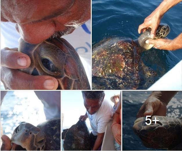 Pescador salva la vida de dos tortugas en costas de Oaxaca