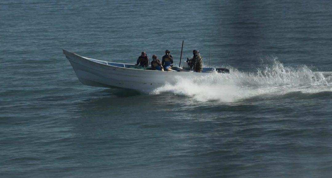 Buque de Profepa y Sea Shepherd es atacado a tiros en el Golfo de California, santuario de la vaquita marina