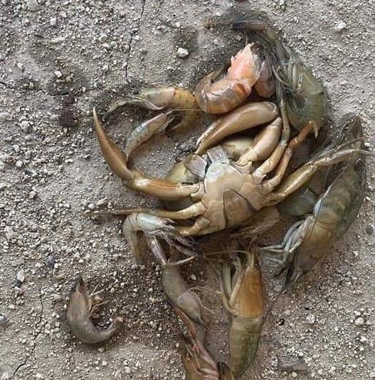 Alertan por muerte de camarones y cangrejos en río de Pluma Hidalgo