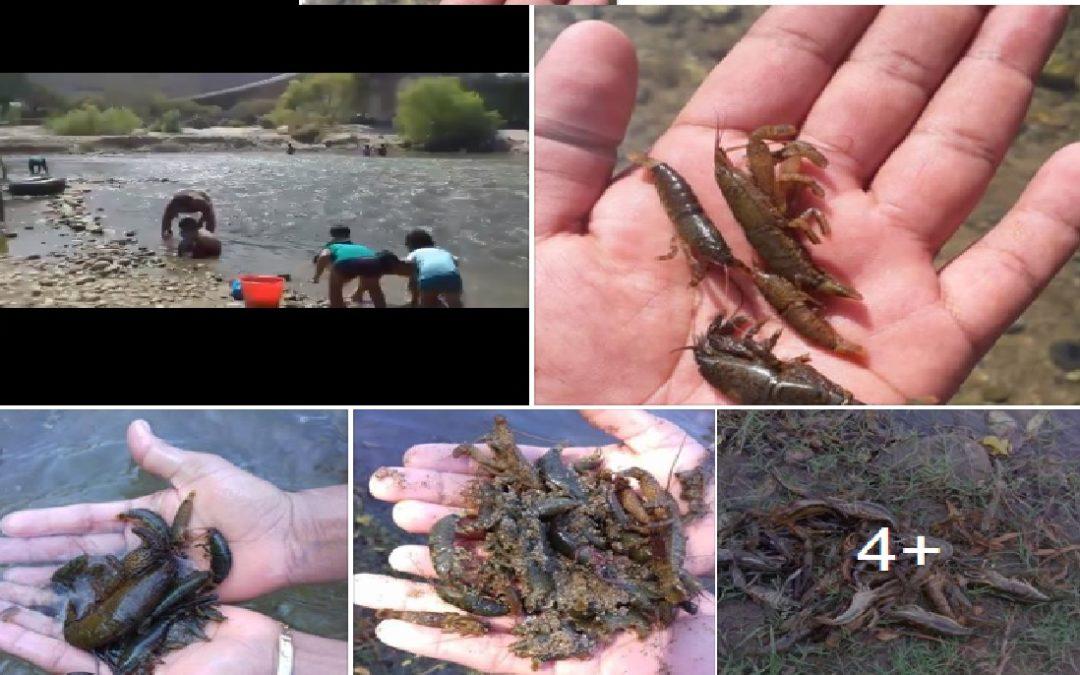Denuncian camarones muertos en Río Copalita