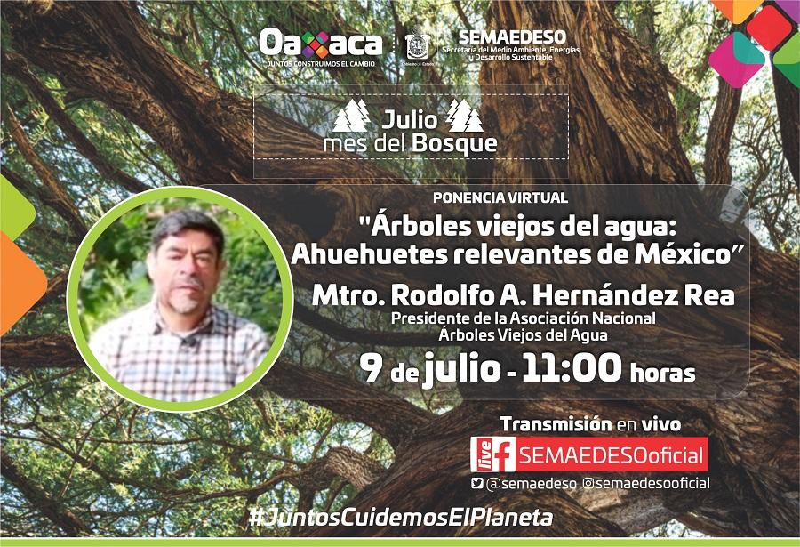 Presenta la Semaedeso conferencia sobre el Ahuehuete, árbol Nacional de México