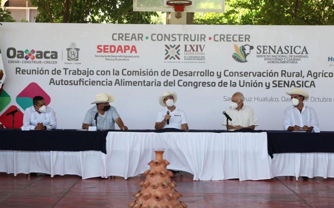 Gobierno de Oaxaca trabaja para hacer crecer la productividad del sector agropecuario