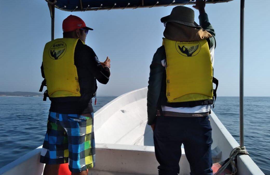 Operativo náutico para búsqueda de ballenas enmallada en el pacifico