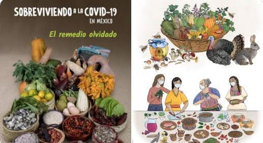 CONABIO presenta la guía  Sobreviviendo a la COVID-19 en México,  el remedio olvidado
